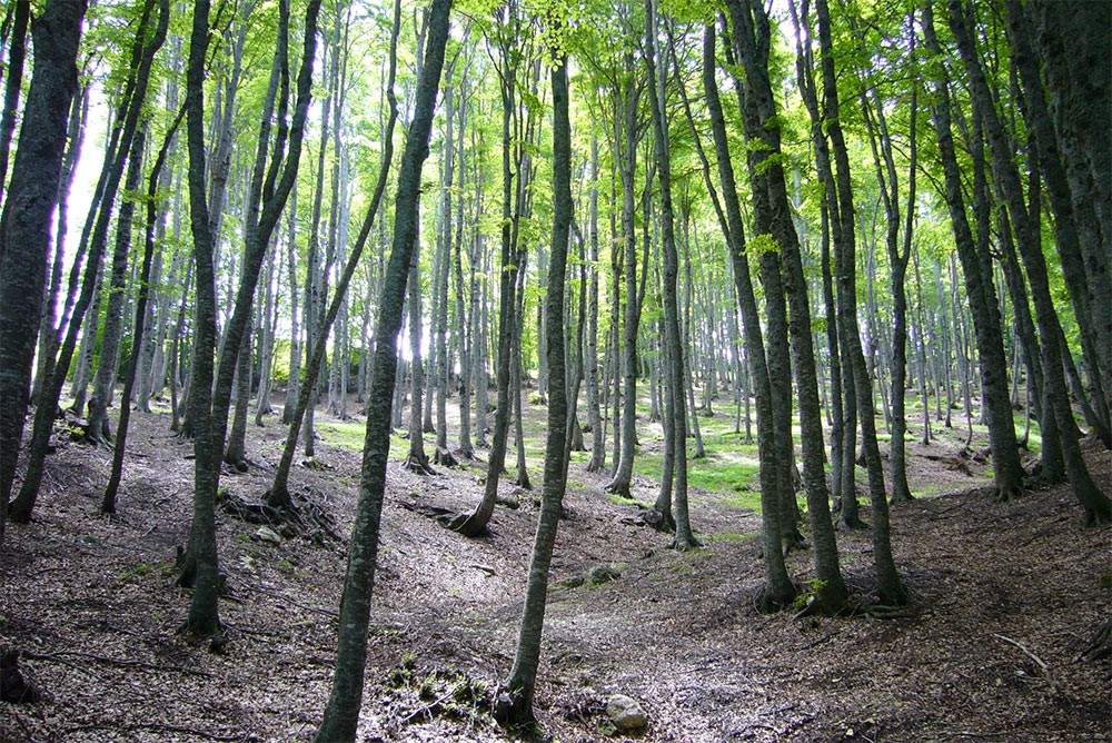 Weird Italy Maiella-National-Park-in-Italy-4 Biggest wildlife sanctuary in Italy: Majella National Park Featured Magazine Nature in Italy What to see in Italy  wildlife pescara mountains monte amaro massif majella maiella nature reserve Maiella National Park chieti abruzzo