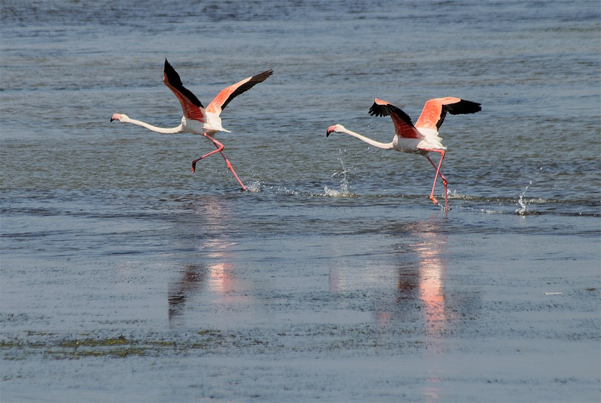 Weird Italy Porto-Pino-flamingos The Fairy Porto Pino Dune Beach in Sant'Anna Arresi Featured Magazine Nature in Italy What to see in Italy  seaport sea sardinia sand dunes Porto Pino phoenician iglesias dune carbonia beach