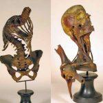 Gorini Anatomical Museum