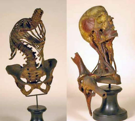 Gorini Anatomical Museum