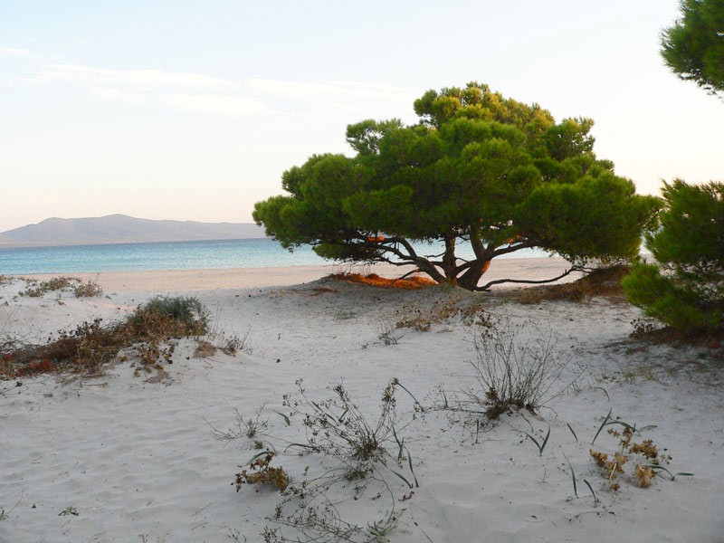 Weird Italy porto-pino-sardinia The Fairy Porto Pino Dune Beach in Sant'Anna Arresi Featured Magazine Nature in Italy What to see in Italy  seaport sea sardinia sand dunes Porto Pino phoenician iglesias dune carbonia beach