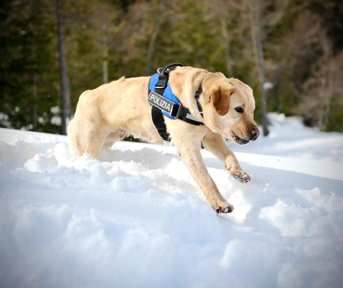 Weird Italy bomb-sniffer-dog-sweeps-cortina-ski-worlds-site Bomb sniffer dog sweeps Cortina ski worlds site What happened in Italy today