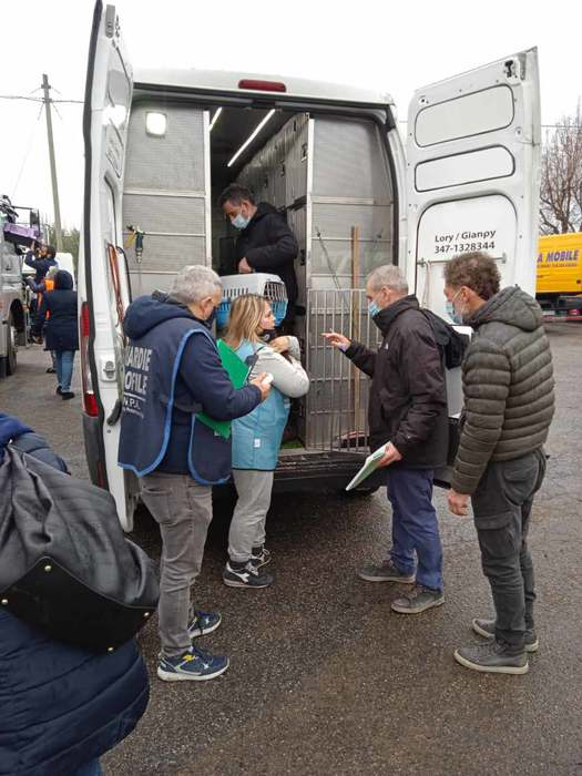 Weird Italy volunteers-who-died-transporting-animals-to-be-remembered Volunteers who died transporting animals to be remembered What happened in Italy today