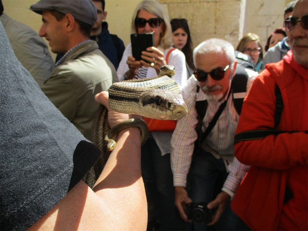 Weird Italy Festival-of-the-Snake-Catchers-6 The Festival of the Snake-Catchers in Italy Featured Italian History What to see in Italy  paganism marsi people folklore catholic abruzzo