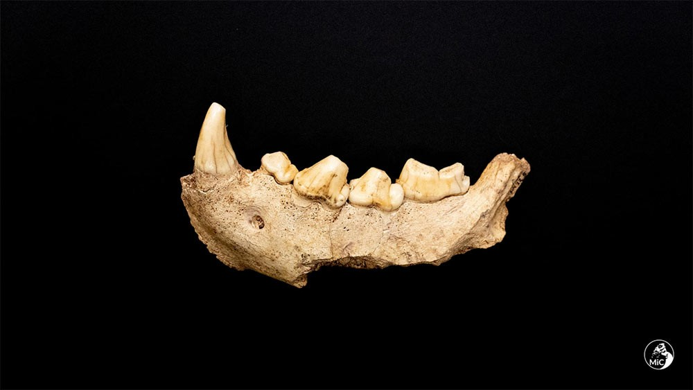 Remains of nine Neanderthals found in Italy