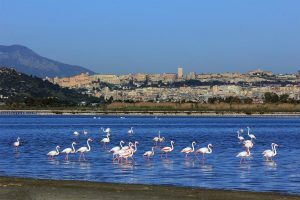 Panorama of the city of Cagliari from the pond of Molentargius, with pink flamingos in the foreground